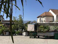 City, Outdoor Decor, Plants, Home Decor, Decoration Home, Room Decor, Cities, Plant, Home Interior Design