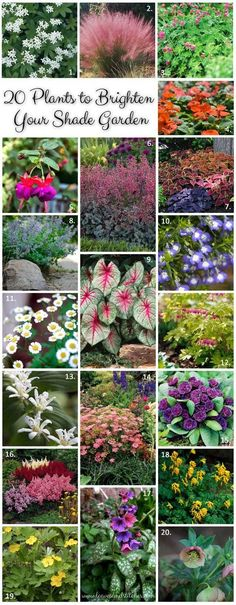 20 plants to brighten your shade garden. Annuals, perennials and herbs for shady places. #flowersgarden #OrganicGardening