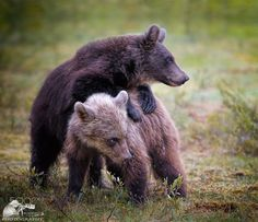 brothers by Urs Schmidli on 500px