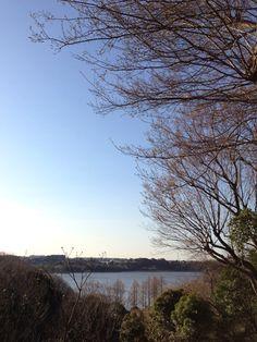 眼下のメタセコイア Overlooking the Metasequoia Hamamatsu, Japan, Celestial, Sunset, City, Outdoor, Outdoors, Cities, Sunsets