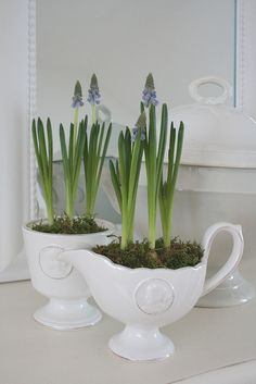 Muscari in milk glass. Tiny paper-whites or crocus would be cute too.