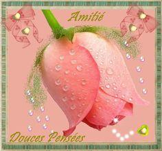 amitie-amitie-douces-pensees-big.jpg (665×622)