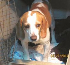 lizardmarsh: Warner Robins GA: URGENT! More Dogs Added! - Euth ...