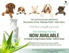 Aloe Veterinary Formula NOW Available in Forever Living Product Center - UAE & Oman Stabilized Aloe Vera gel as its primary ingredient and is ideally suited for external skin problems for your pet. #AloeVeterinaryFormula #UAE #Oman #Availability #Pets #Care #Skin #Puppy