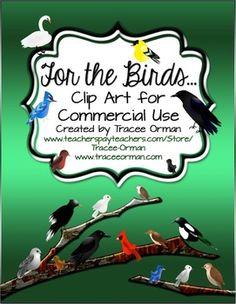 Birds on Pinterest   Brown Bears, Robins and Birds