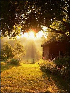 Summer Morning. In harmony with Nature.