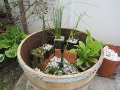 Unser steiniger Stadtgarten: Miniteich im Fass