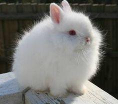 Oooooh, it's so fluffy! *.*