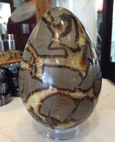 Crystal Dragon, Crystal Egg, Septarian Stone, Gray Rock, Dragon Egg, Beautiful Rocks, Agate Geode, Petrified Wood, Rocks And Minerals