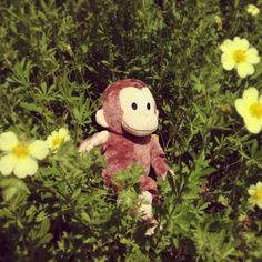 just a curious monkey hanging out in the flower garden. Hanging Upside Down, Hanging Out, Orangutans, Curious George, Primates, Monkeys, Curiosity, Clinic, Cute Animals
