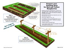Raised Garden Beds Discover prepare your space for raspberry planting Gardening Raspberries, Growing Raspberries, How To Plant Raspberries, Fruit Garden, Edible Garden, Vegetable Garden, Raspberry Bush, Raspberry Plants, Raspberry Desserts