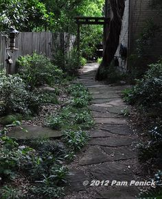 Shady side garden and flagstone path.leads around to the side garden, a shady oasis from the Texas sun which has been made into more than just a pass-through with a slightly curving path, pretty groundcovering plants, the retention of a focal-point juniper tree with a beautifully twisted trunk, and a wooden arbor announcing the transition to the back garden.
