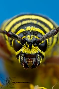 Wasp Up Close!  Call A1 Bee Specialists in Bloomfield Hills, MI today at (248) 467-4849 to schedule an appointment if you've got a stinging insect problem around your house or place of business!