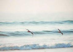 Ocean Waves, Nautical Decor, Pelicans, Beach Home Decor, Aquamarine, Turquoise, White, Pale, Summertime, Ocean Photography, 8x10.