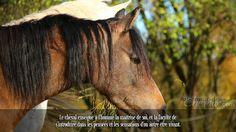 Le cheval enseigne à l'homme la maîtrise de soi, et la faculté de s'introduire dans les pensées et les sensations d'un autre être vivant.