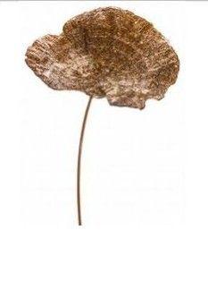 Mushroom pic