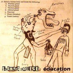 brutalgera: Scumbag College - Education (2015), Deathgrind