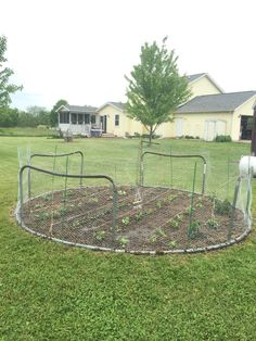 Turned old trampoline frame upside down. Legs are posts for chicken wire fence.