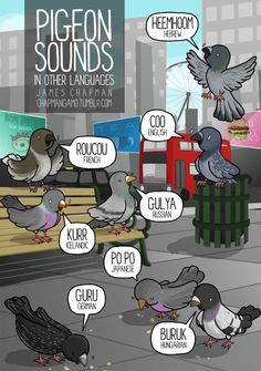 How to sound like a pigeon in 8 languages twitter facebook instagram shop