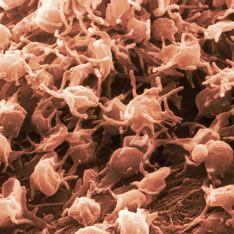 Platelets, for blood clotting.