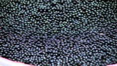 Welcome to the world of Carelian Caviar