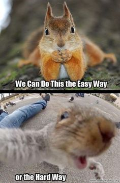 For those who are looking for some fun and laughs, we have collected best most funniest animal memes. Animals are always very funny when they make weird faces and you give perfect caption. Here are few funny Animals Memes Hope they will make up your day Funny Animal Jokes, Funny Animal Pictures, Cute Funny Animals, Animal Memes, Funny Cute, Funny Memes, Hilarious, Pictures Images, Squirrel Pictures
