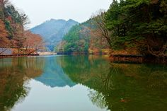 reflection by MIYAMOTO Y