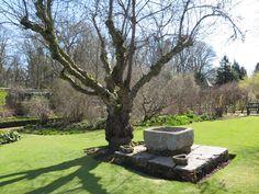 Cassie Liversidge- Crathes Castle Garden- Scotland