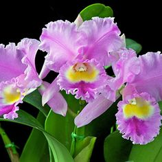 how to care for orchids and get more blooms | Garden Club