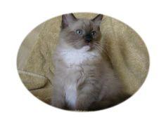 #cat , #cutecat, #ilovecat. See more at -  http://knowyourcat.tumblr.com/