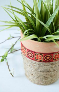 Easy jute rope plant