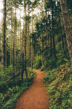 accio-forest:   Deception Pass (source) : expressions-of-nature