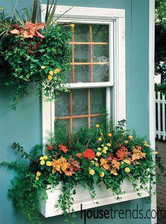 Planter boxes dress up windows