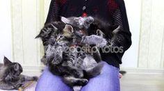 Mädchen spielen mit Kätzchen — Stockvideo #106670498