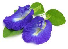 Top Four Ayurveda Brain Tonic Herbs: Enhance your Brain Powers Naturally