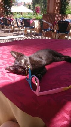 Cute little stray kitten playing with my sunglasses in Marrakech!