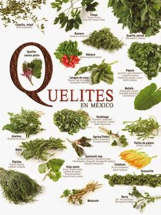 """Quelite"" (froml náhuatl ""quílitil"": plants that leafes can be eaten). All wild herbs that mexicans use to eat and cure deseases. There are more than 500 kinds of ""quelites"" truly important in the mexican diet from ancient times. Authentic Mexican Recipes, Mexican Food Recipes, Healthy Recipes, Healthy Nutrition, Healthy Cooking, Healthy Food, Mexican Kitchens, Mexican Dishes, Barbacoa"