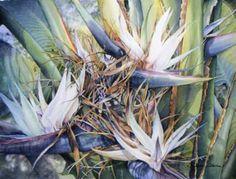Bird of paradise white flower real white bird of paradise palm bridgette adams watercolor mightylinksfo