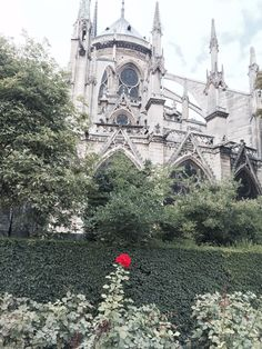 Belle Rose a Notre Dame New Books, Notre Dame, This Is Us, Coast, French, Life, French People, French Language, Early French
