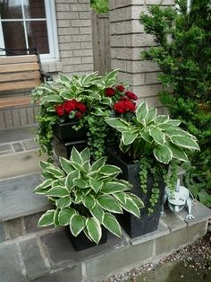 Hostas in a pot: every spring they return, in the pot! Add geraniums and ivy for a fuller look. Why do I not think of this? - interiors-designe... #LandscapingIdeas