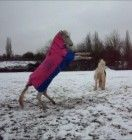 KP Combo Rug! Equestrian, Rugs, Farmhouse Rugs, Horseback Riding, Show Jumping, Rug, Equestrian Problems