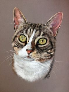 Pastel Drawing, Pastel Art, Cat Drawing, Painting & Drawing, Animal Paintings, Animal Drawings, Crayons Pastel, Cat Sketch, Cat Photography