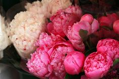 Peonies give hydrangeas a run for their money as my favorite flower