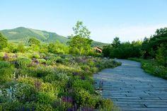 Tokachi Millennium Forest in Hokkaido, Japan by Dan Pearson Meadow Garden, Dream Garden, Architectural Digest, Formal Gardens, Outdoor Gardens, Plant Design, Garden Design, Landscape Architecture, Landscape Design