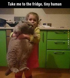 Take me to the fridge