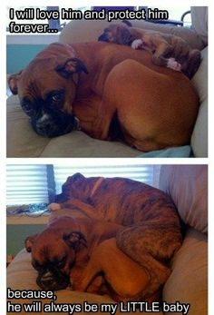 This is exactly how boxers lay.  They believe everything is theirs to lounge on, and it's. freakin'. adorable.