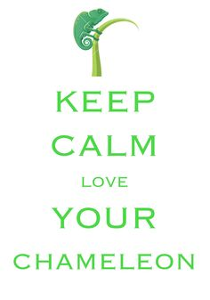 keep calm love your chameleon / Created with Keep Calm and Carry On for iOS #keepcalm #chameleon