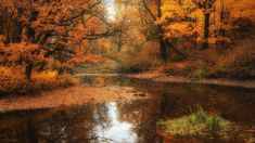 Drzewa Las Rzeka Beautiful Simply Autumn Jesien Natura Forest Wallpapers For Android Autumn Nature, Autumn Forest, Nature Tree, Deep Autumn, Autumn Leaves, Forest Wallpaper, Fall Wallpaper, Nature Wallpaper, Fall Desktop Backgrounds
