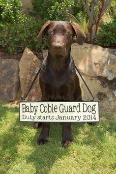 Include the dog in your pregnancy announcement!  I just love this dog's face!