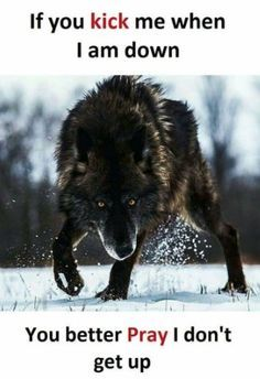 Wolf quotes and saying. The Wolf is a symbol of guardianship, instinct, loyalty, and spirit. The Wolf represents strong connection with instincts and intuition, high intelligence and communication – qualities we all should aspire to. Badass Quotes, Best Quotes, Marshmello Face, Lone Wolf Quotes, Angry Wolf, Motivational Quotes, Inspirational Quotes, Warrior Quotes, Wolf Pictures